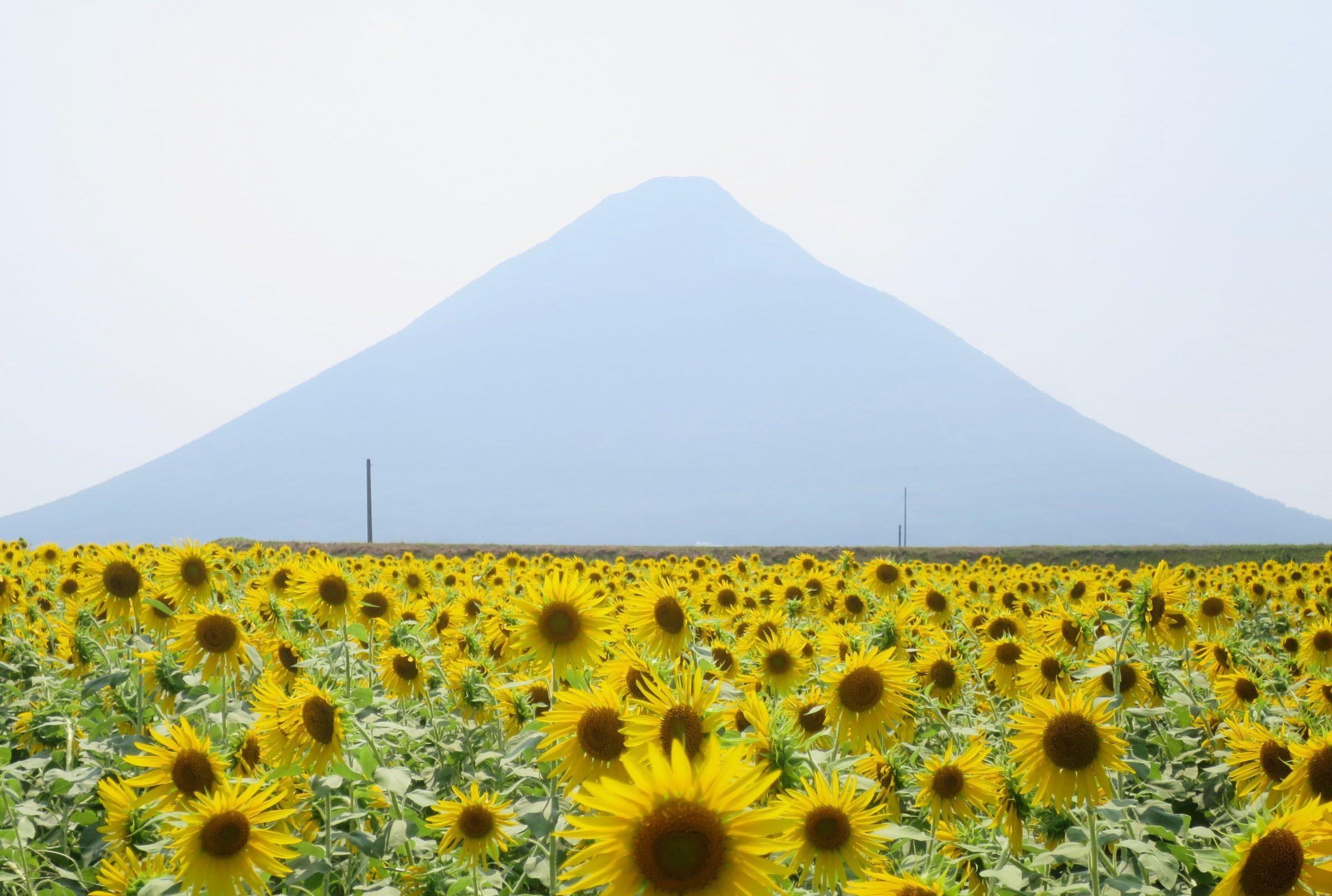 日本最南端的車站!「西大山」夏季限定向日葵花海