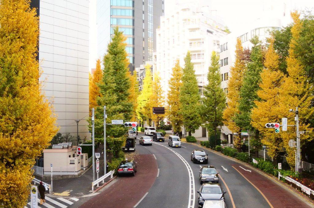 2019秋季必訪金黃色的絨毯!東京都內銀杏私藏景點11選