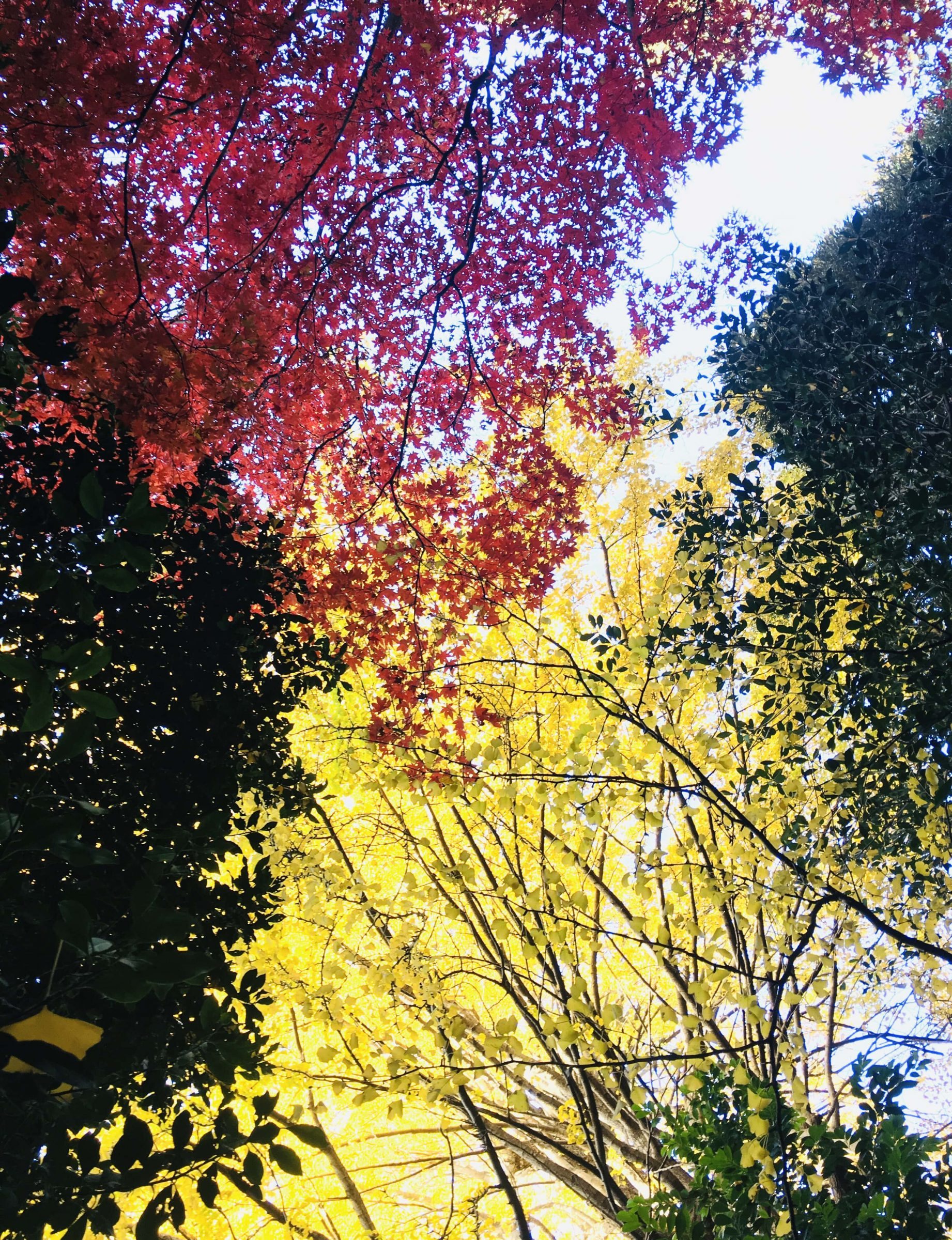 2019秋季賞楓特輯!東京都內紅葉推薦景點9選
