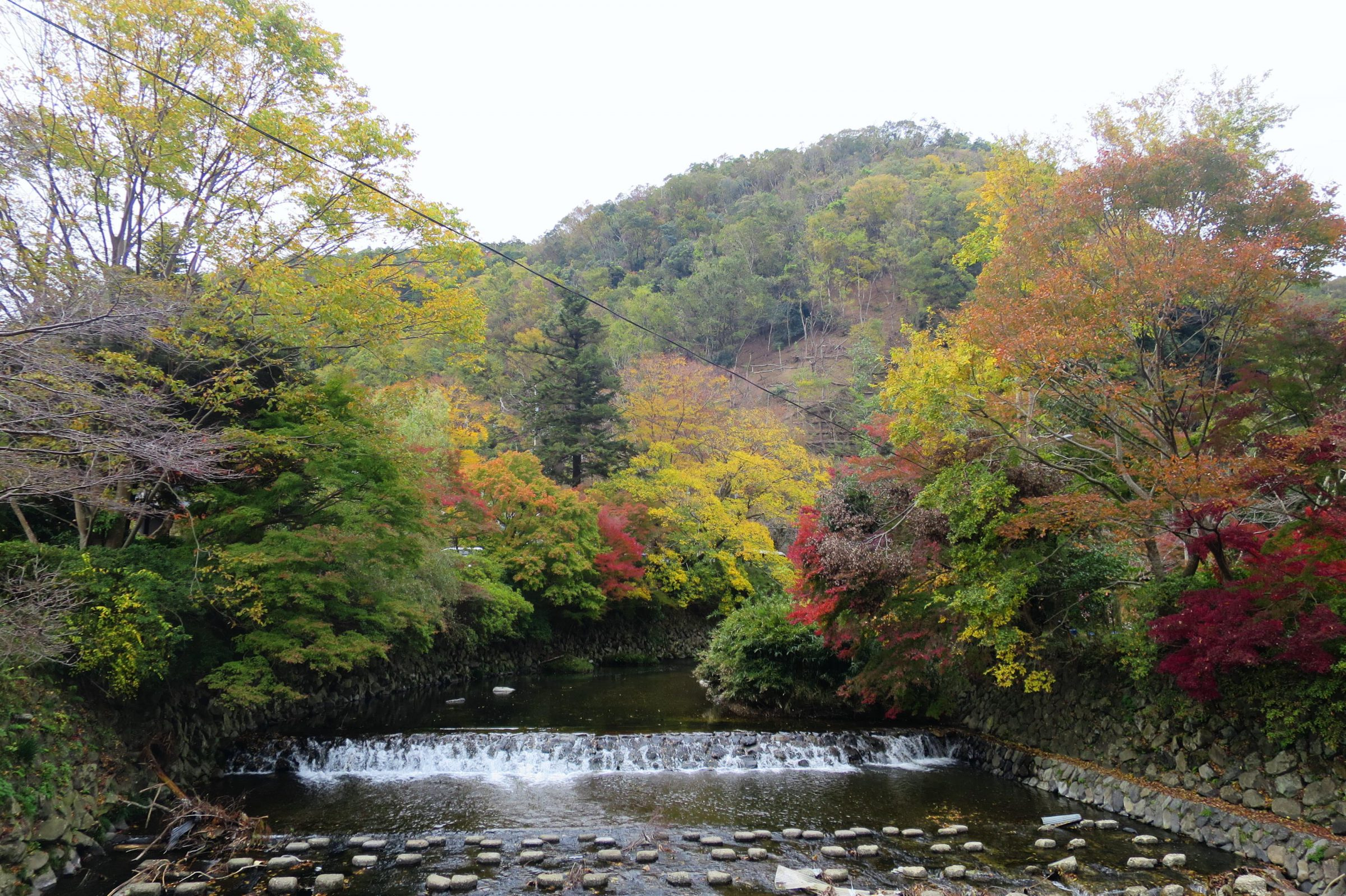 每年只開放2次!京都秋季賞楓景點:八瀨比叡山口「瑠璃光院」絕美紅葉窗景