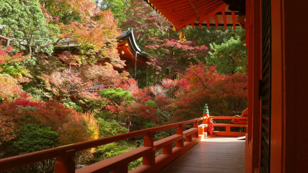 京都紅葉私藏景點推薦!山科「毘沙門堂門跡」優美楓紅景色