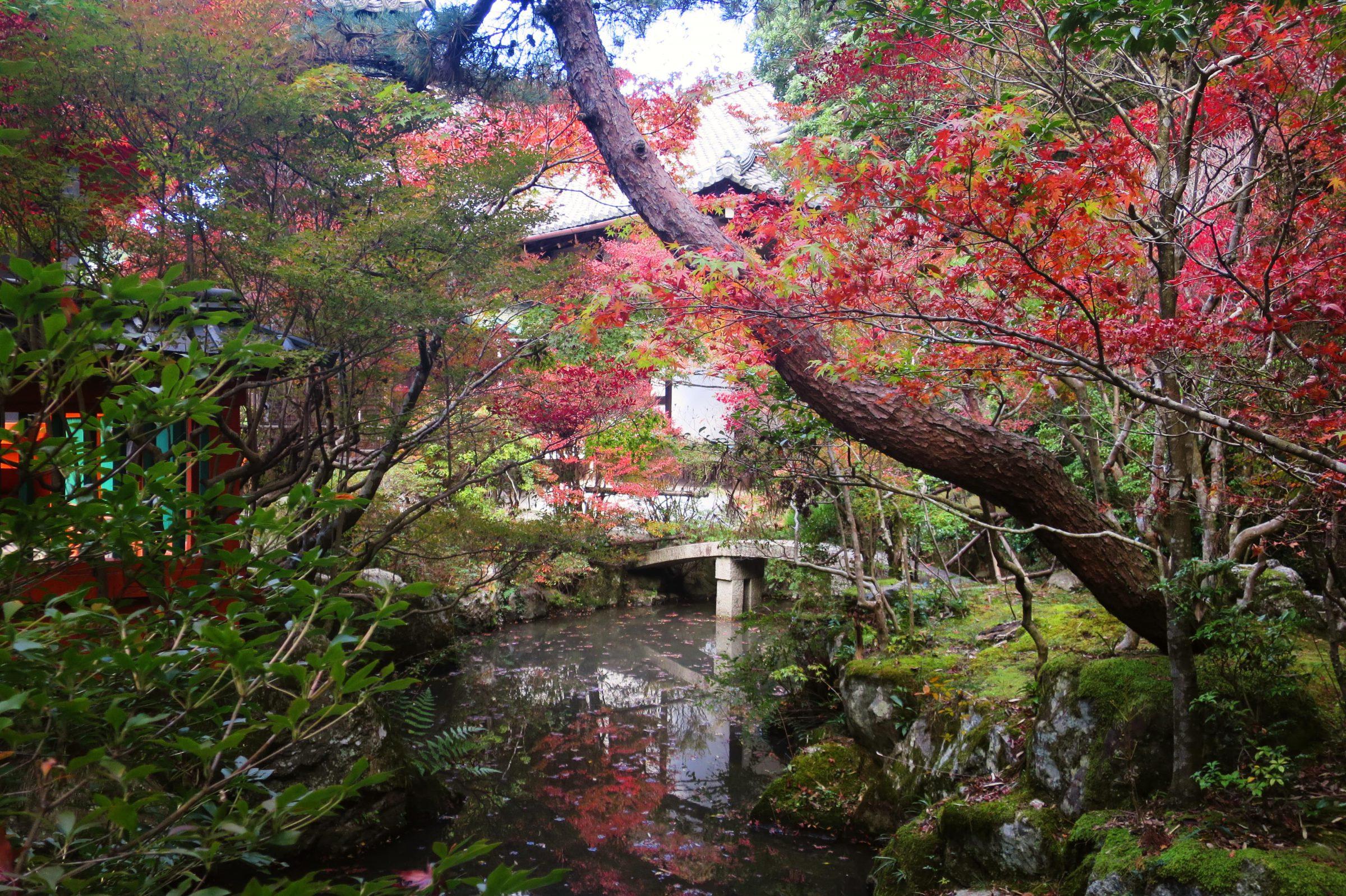 京都紅葉私藏景點推薦!山科「毘沙門堂」優美楓紅美景