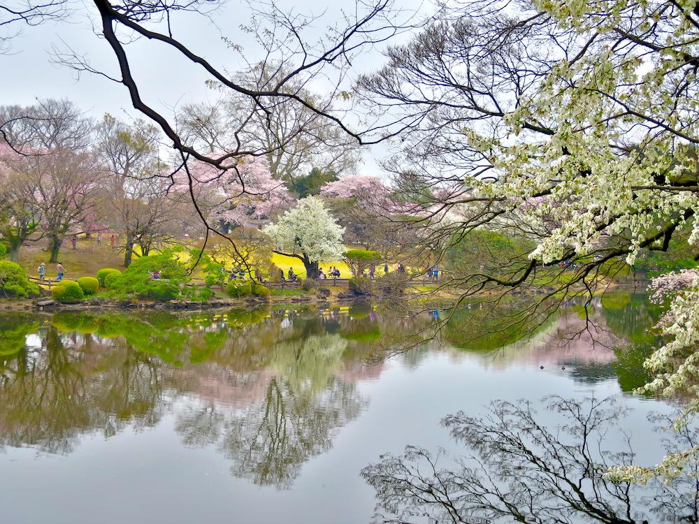 東京都內櫻花景點13選!景點介紹+櫻花預測整理