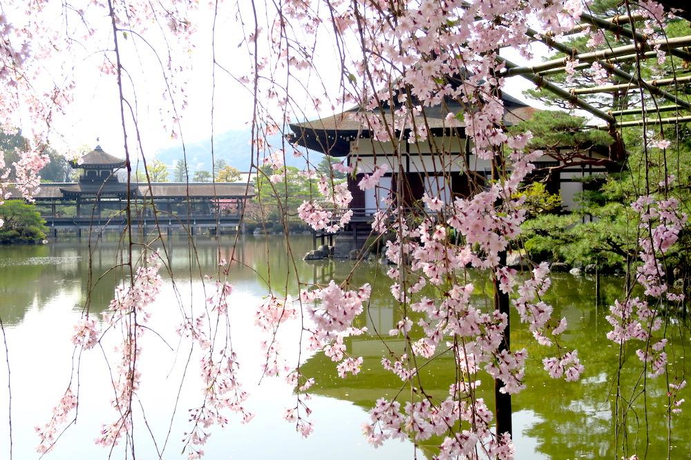 用¥600巴士一日券玩遍!京都一日賞櫻行程景點推薦