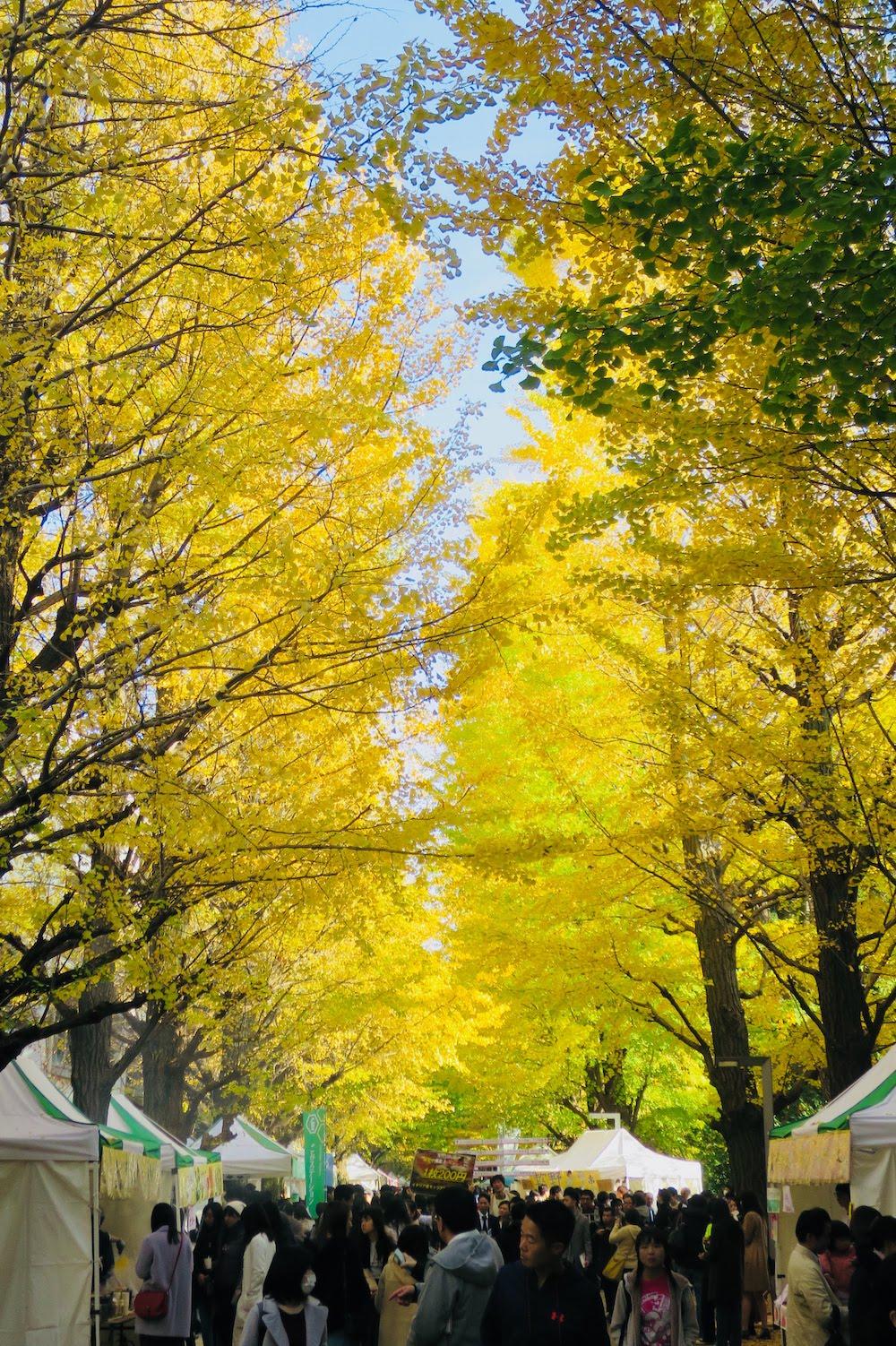 東京大學(駒場校區) 銀杏並木