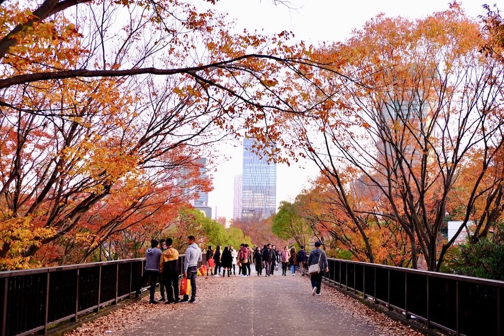 代代木公園 紅葉