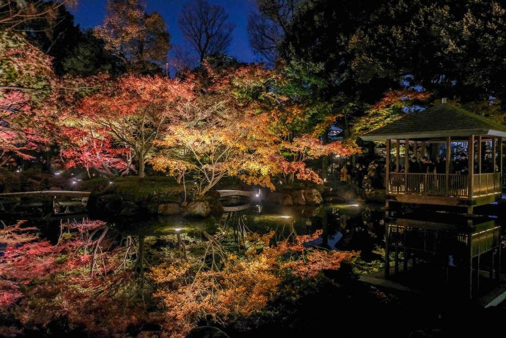 東京免費私藏賞楓.銀杏景點:荻窪「大田黑公園」2020夜間點燈