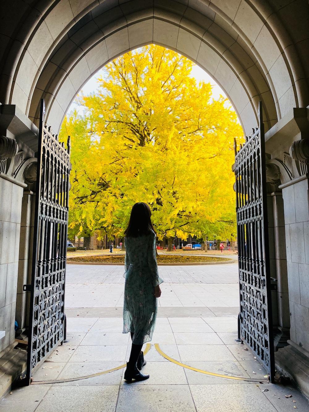 東大 工學院1號 銀杏樹