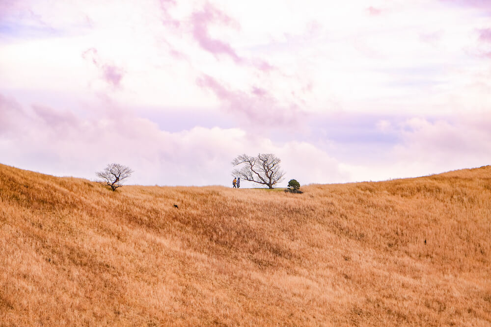 大室山 山頂 秋季
