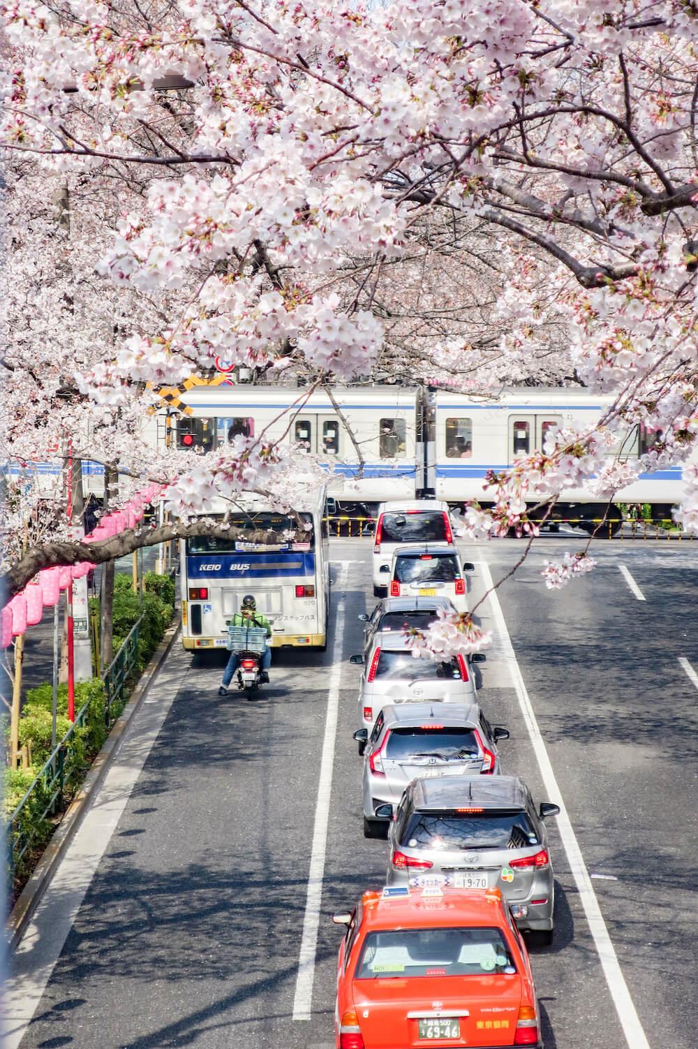 中野天橋 拍攝疾駛而過的路面電車