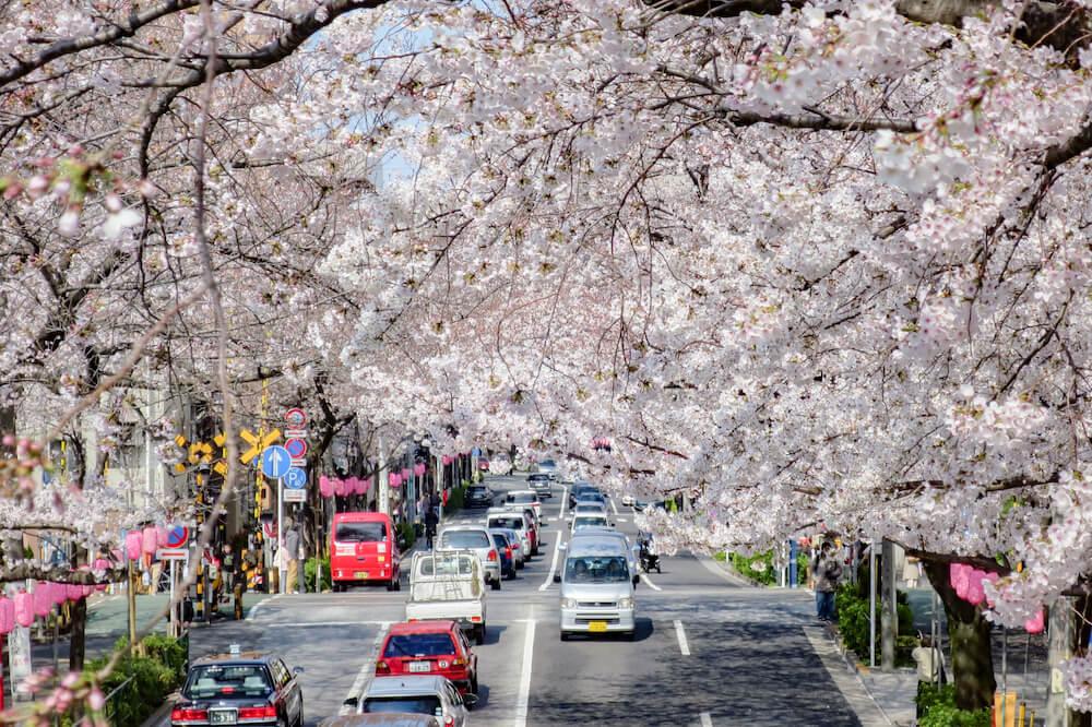 中野天橋 拍攝黃色路面電車 平交道
