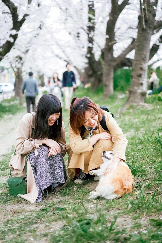 日本櫻花名所百選・埼玉「熊谷櫻堤」巧遇可愛的狗狗
