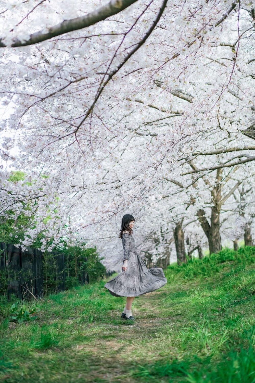 日本櫻花名所百選・埼玉「熊谷櫻堤」櫻花小徑