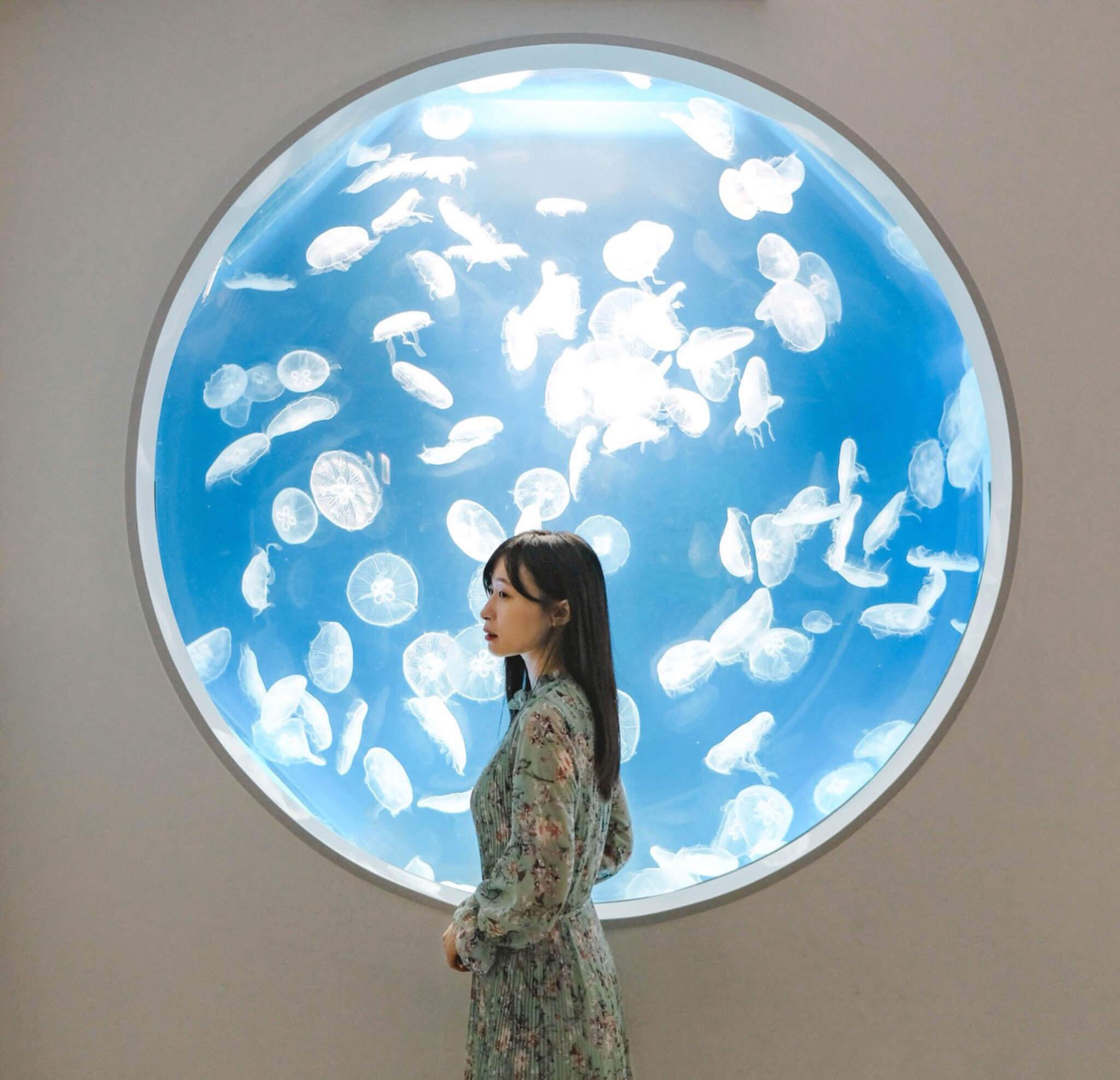 Xpark海月水母