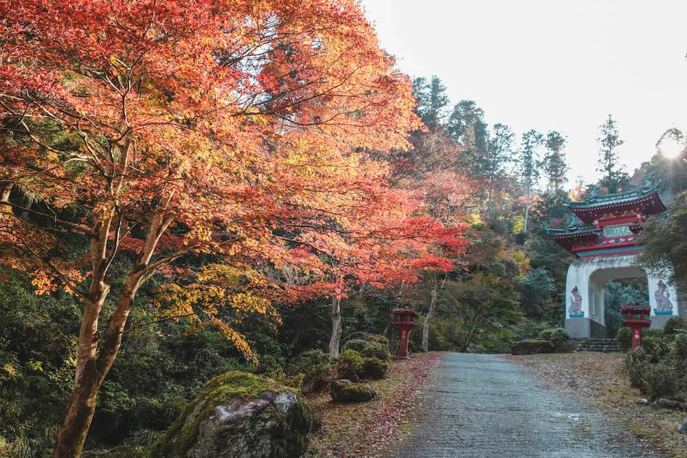 埼玉飯能・白雲山鳥居觀音 2020東京近郊秋季賞楓小旅行