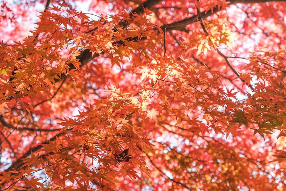 埼玉飯能・名栗湖紅葉|2020自駕近郊小旅行,最美的水壩沿景