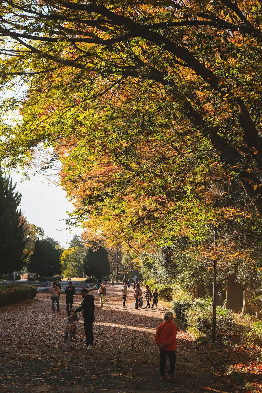 日本航空起點!在埼玉「所澤航空紀念公園」楓紅銀杏中享受愜意午後時光