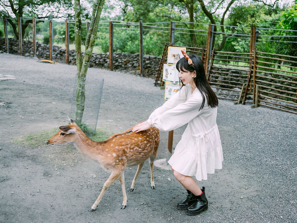 宜蘭景點・斑比山丘Bambi Land:迷你版奈良公園,療癒小鹿斑比&迷你驢零距離互動