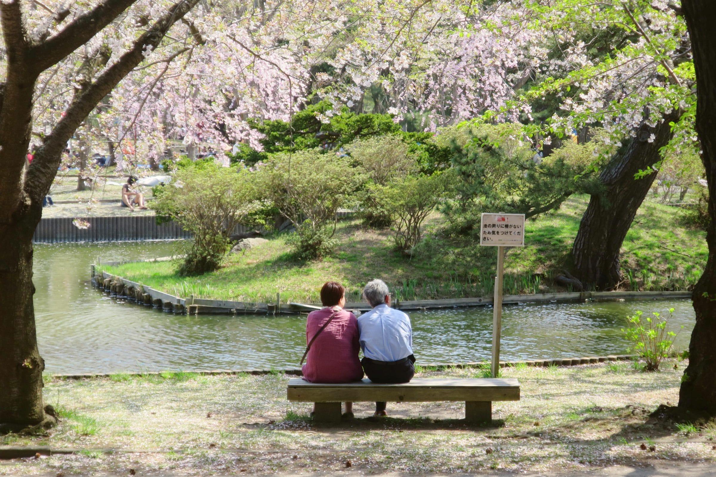 青森不只弘前城可以賞櫻花!青森在地人才知道的合浦公園