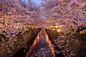 【東京賞櫻景點】目黑川沿岸賞櫻-帶你欣賞不可思議的櫻花美景!
